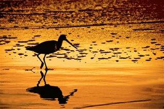 Shorebird, El Matador State Beach