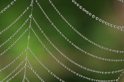 Dewdrops on Spiderweb